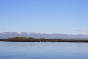 Fjaran er frábær staður til selaskoðunar. Við sáum stóran hóp sela  flatmaga á sandinum